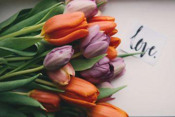 מכתב אהבה לחבר יקר – מר מאני